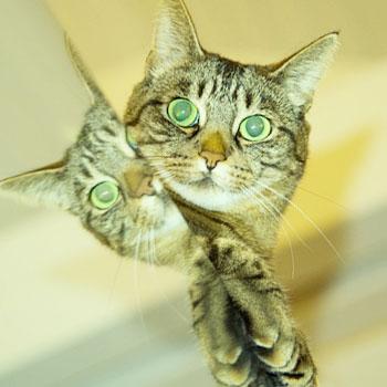 mirror_cat