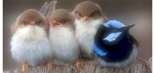 birds on fence huddled together three the same color one back turned different color